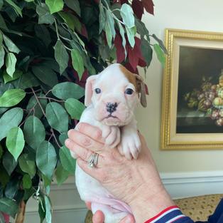 Daisy 4 weeks
