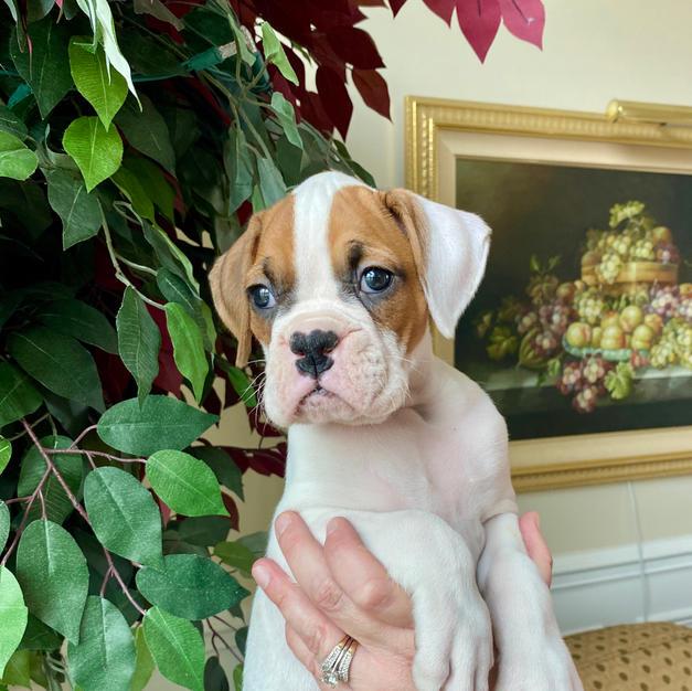 Minnie 6 weeks