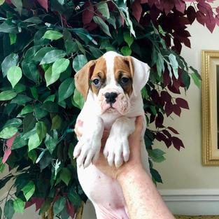 Minnie 8 weeks