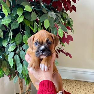 Bruno 6 weeks