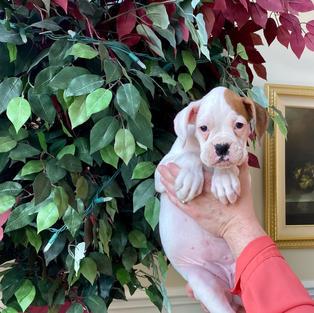 Daisy 7 weeks
