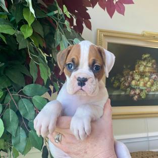 Minnie 5 weeks