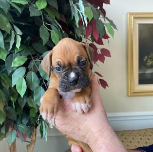 Bruno 4 weeks