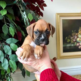 Belle 6 weeks