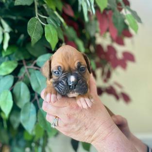 Bruno 3 weeks