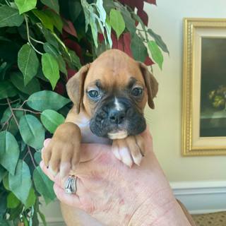 Belle 5 weeks