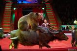 Цирк Никулина отметил день рождения премьерой нового шоу!