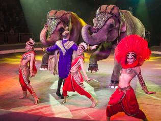 Индийские танцы и СЛОНЫ  - в Твери проходят гастроли шоу «ИНДИ РА» династии Корниловых