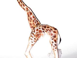 Необычный боди-арт: люди в образах животных