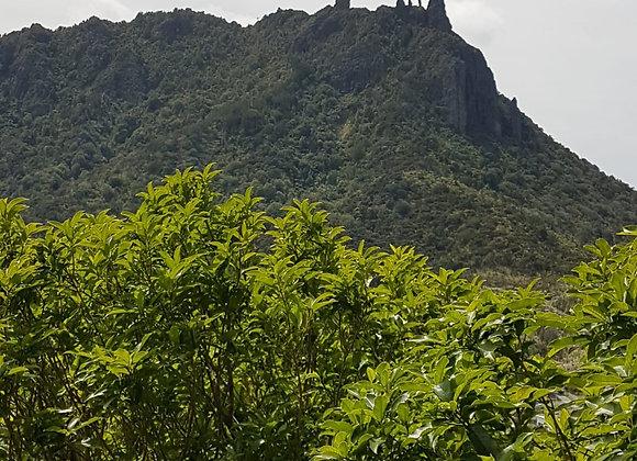 Mt Mania scenic view
