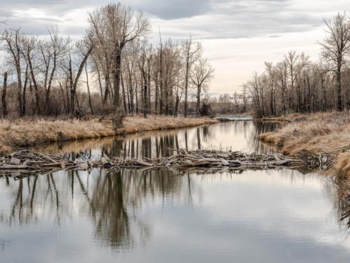 Bird Sanctuary, Calgary, Alberta
