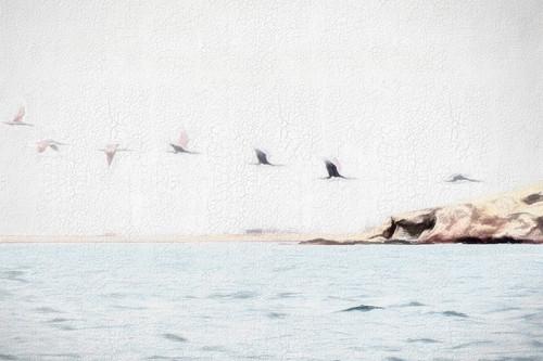 Pelicans GirlBE.JPG