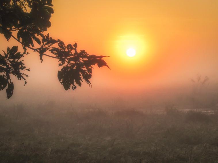 Sunrise in the jungle