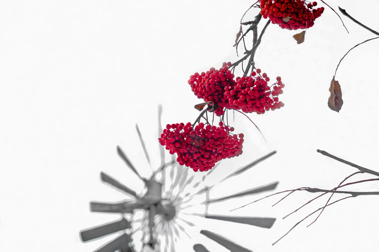 Red berries and a windmill