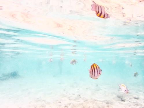 Fish Reflection