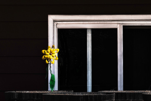 Yellow Flower Alone