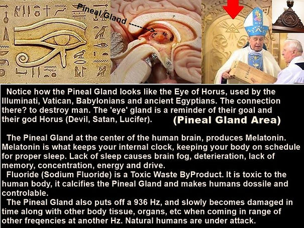 Pineal explanation.jpg