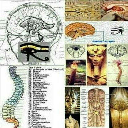 pineal and your spine.jpg