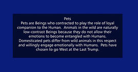 pets animals in the wild.jpg