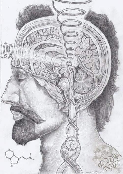 pineal gland pencil sketch.jpg