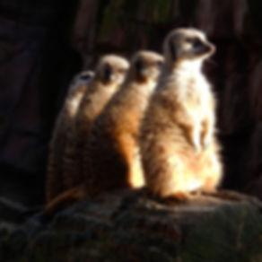 Zoo of Antwerp by FotoLeen
