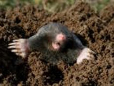 Des animaux piégés à la strychnine soit un violent poison mortel !