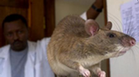 Les rats du futur