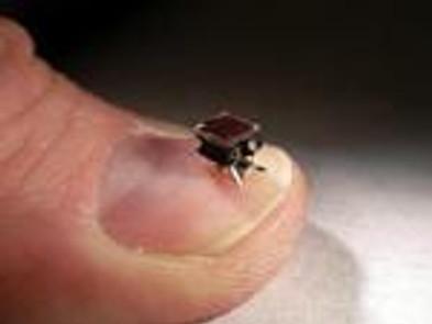FOURMIS : insectes robots pour aider les sauveteurs durant les catastrophes naturelles