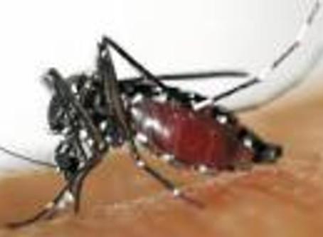 Comment et savoir combattre, éliminer les foyers du moustique-tigre