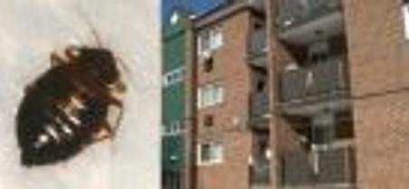 Des locataires de logement HLM contre les Punaises de lit