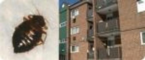 invasion punaises de lit dans logements HLM