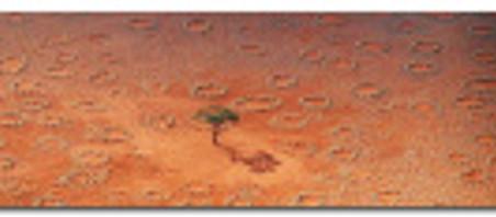 Des réserves d'eau pour termites dans le désert de Namibie
