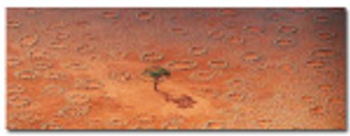 termites-du-desert-namibien