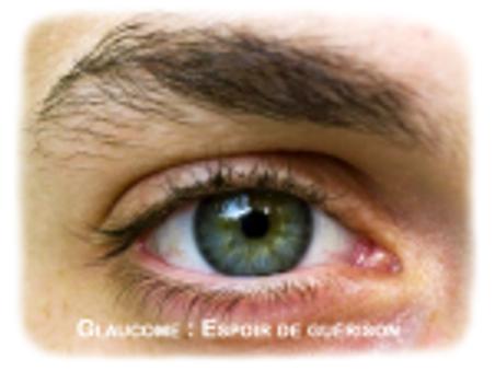 Glaucome : un nouveau traitement restaure la vision chez des rats