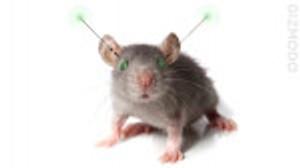 De la Bière contre des rats !