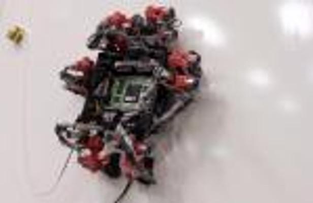 robot_gecko