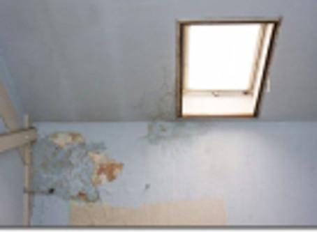 Santé : Des moisissures invisibles dans les maisons