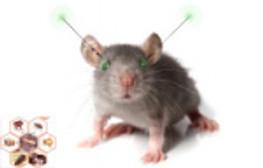 Expérience sur les rats