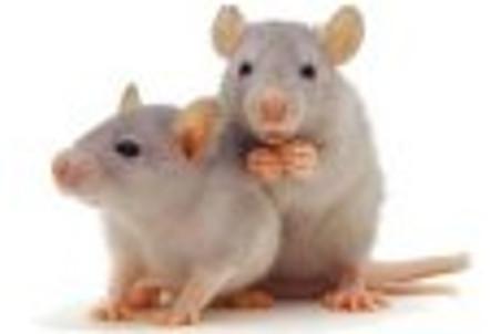 Des courses + paris de rats et de cafards dans le centre de Moscou !
