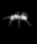 Les fourmis sur la réunion 974