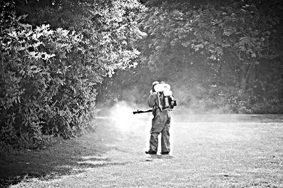 Lutte chimique contre les moustiques