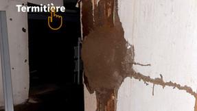 Nid de termites souterrains