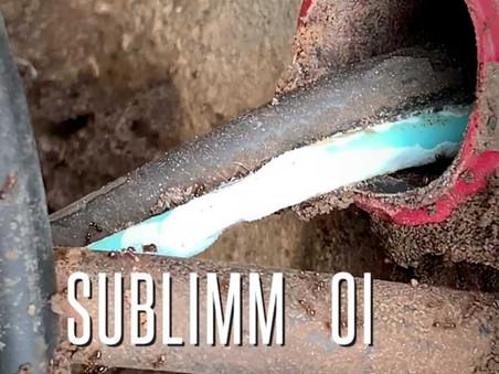 Fourmis se nourrissant des câbles de fibre optique