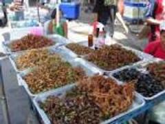 Des insectes pour lutter contre la demande alimentaire mondiale
