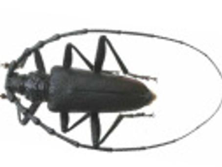 SUBLINSECTES : Contre les insectes du bois xylophages