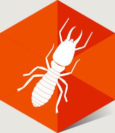 Les essaims de termites durant les températures printanières