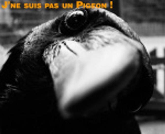 Corbeau mais pas pigeon voyageur.
