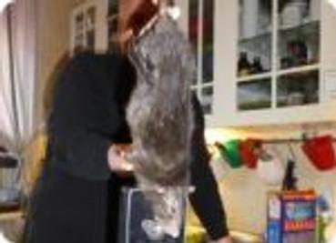 rat geant de 40 cm sans la queue