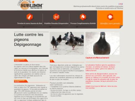 Lutte et régulation des pigeons de biset dans nos villes ou villages