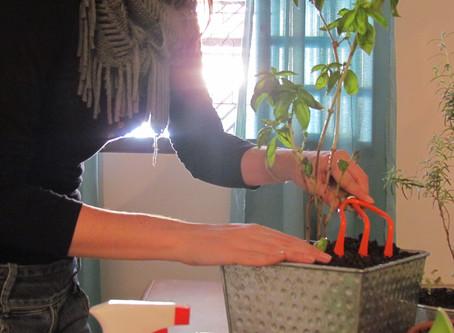 Como cultivar uma horta orgânica